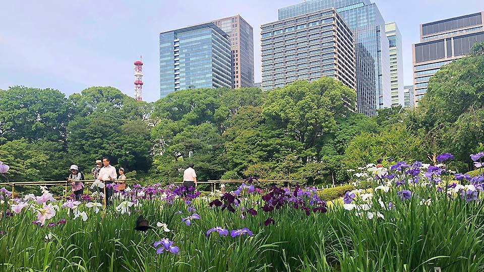 位在東京正中央的免費優質隱藏景點,就在「皇居」裡!